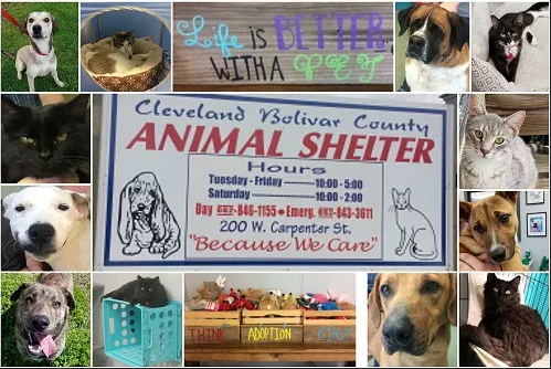 Animal Shelter Collage